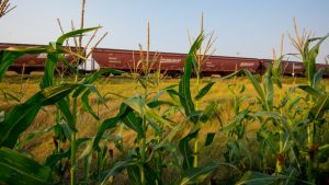 """A new online portal will identify """"the last contents hauled in a particular railcar to continue to ensure the highest food safety standards are met and to comply with the U.S. Food and Drug Administration's food sanitary transportation rules,"""" AAR said."""